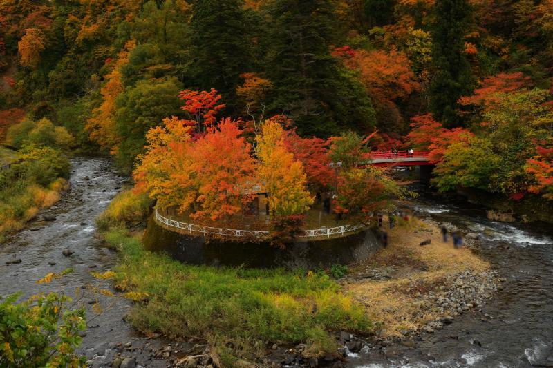 [ 紅葉島 ]  川が急カーブし、その中央が島になっています。中野もみじ山で人気の定番構図です。