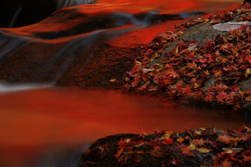 強滝 紅葉|