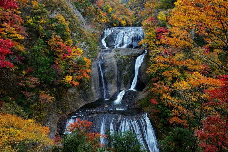 錦秋の袋田の滝| 幾段もの流れが美しい静かな巨瀑。赤やオレンジの紅葉が滝を囲み、カラフルな滝に。