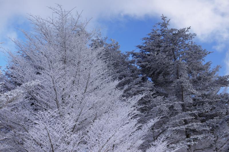 [ 霧氷 ]  真っ白に凍りついた木が印象的でした。