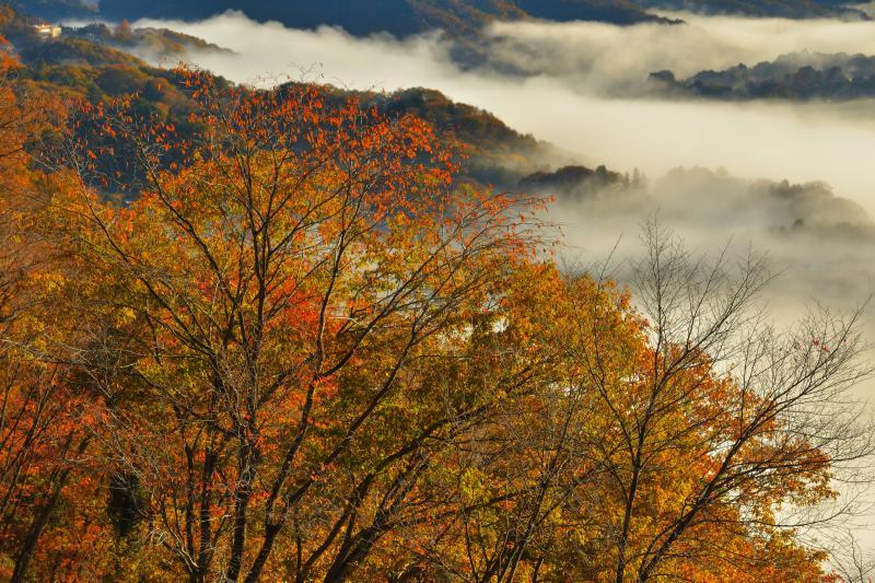 [ 紅葉雲海 ]  駐車場付近から撮影。手前の紅葉した木々と雲海のバランスがとても良い場所です。撮影した日は紅葉もピークでとても美しい風景でした。