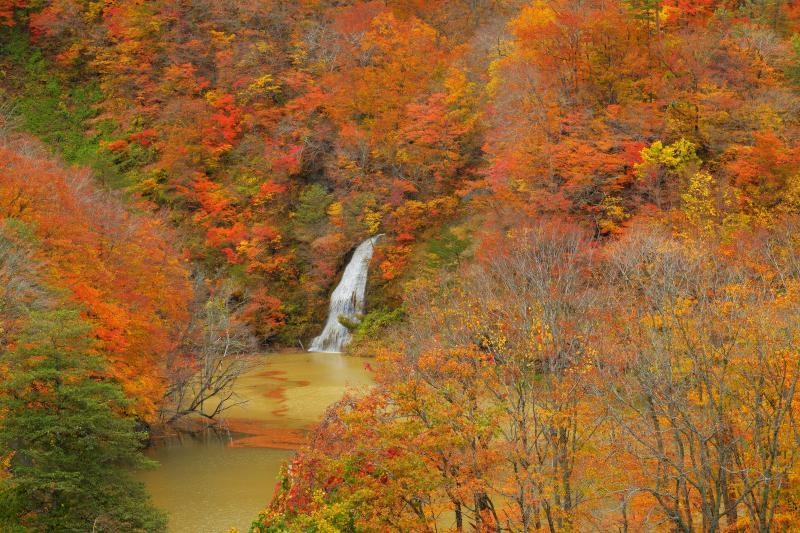 [ 紅葉と滝 ]  全山紅葉の中、ダム湖に流れ込む滝の白い流れが美しい。