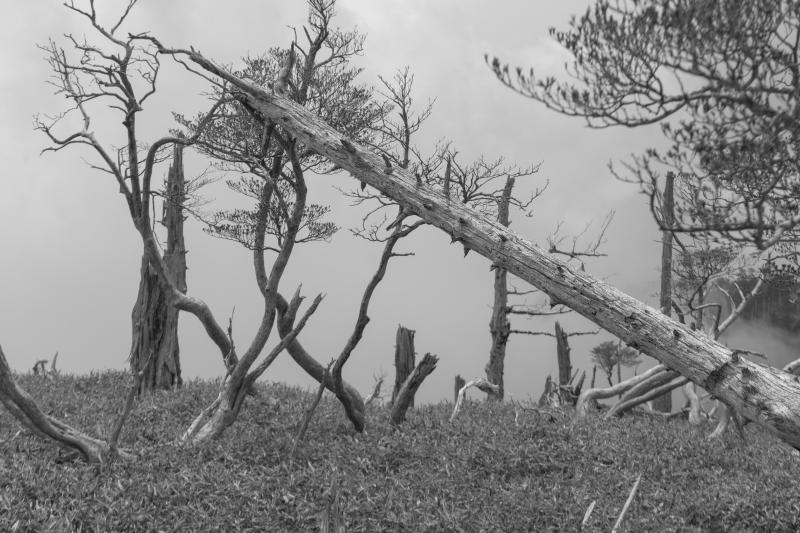倒木| たくさんの倒木と立ち枯れを見ることができます。