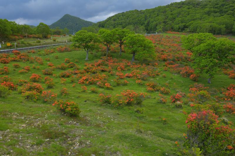 [ 白樺牧場全景 ]  上毛三山パノラマ街道に隣接して広がる白樺牧場。初夏にはレンゲツツジでオレンジに染まります。