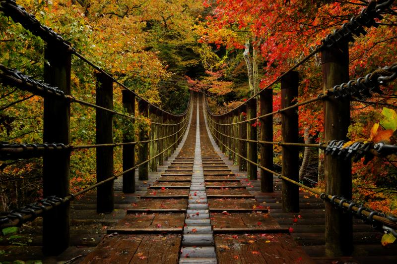 汐見滝吊橋紅葉| 渓谷の一番の見所になっている汐見滝吊橋。橋の左右からモミジが枝を伸ばし、橋を彩っていました。