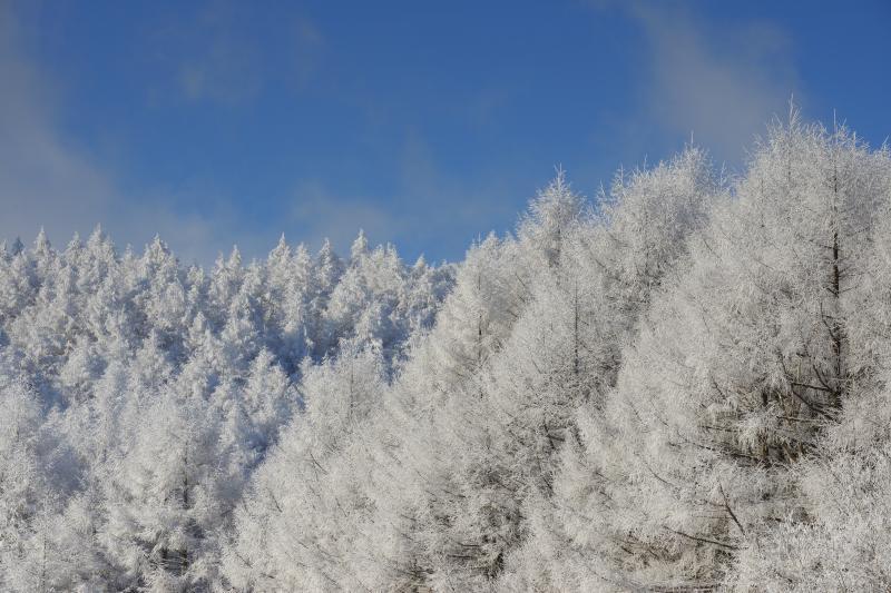 聖高原 中牧湖 霧氷|