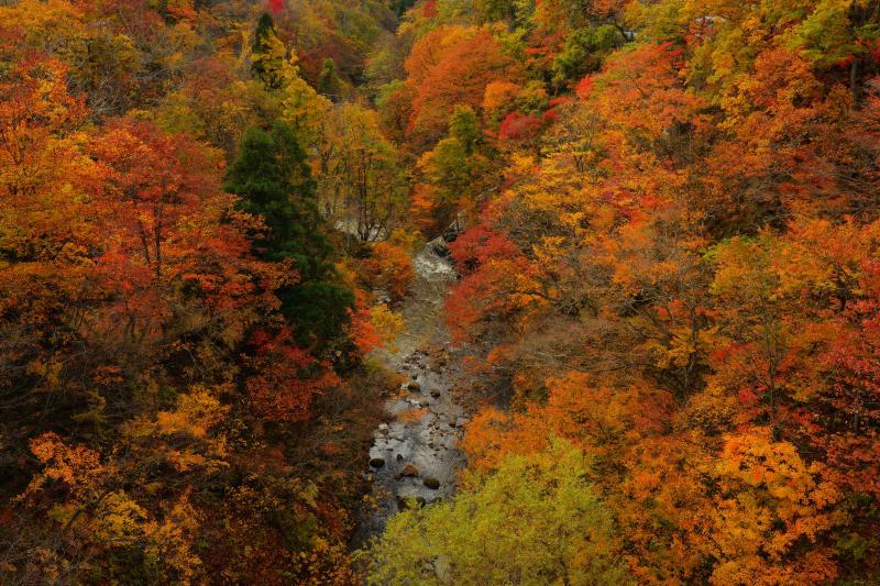[ 峡谷紅葉 ]  橋の上からは紅葉真っ盛りの三途川の絶景が広がっていました。赤とオレンジがとても美しい紅葉です。