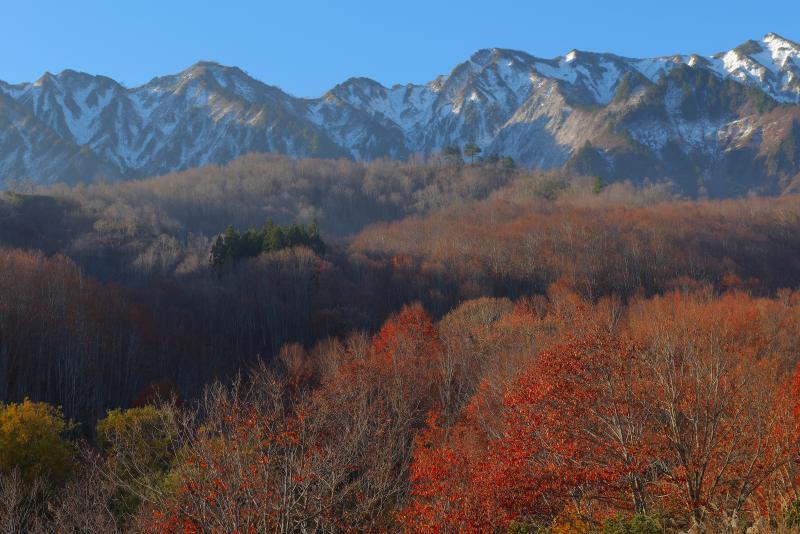 [ 紅葉と冠雪した山々 ]  樹海ラインを走っていると、正面に冠雪した山々の姿が。紅葉も終わりが近づいてきました。