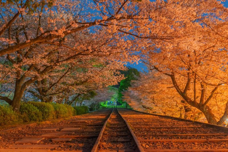 蹴上インクラインの桜|