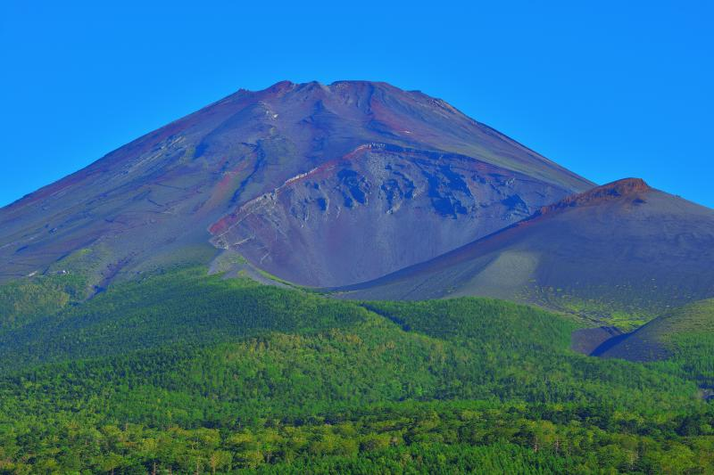 夏富士| 緑豊か、青空に映える真夏の富士山。水ヶ塚公園は富士山をとても近くに感じることができる場所です。