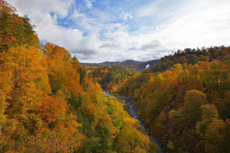 紅葉の谷| 橋の上から八幡平方面を望む。迫力ある紅葉の大斜面。