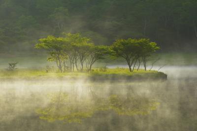 スポットライト| 早朝、水面から朝霧が湧き上がり、差し込んでくる朝陽によって木々が輝きます。