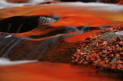秋の赤  渓流沿いにあるモミジは真っ赤に紅葉し、それが川面に映り込んでいます。川が真っ赤に染まり、アート的な写真を撮ることができました。