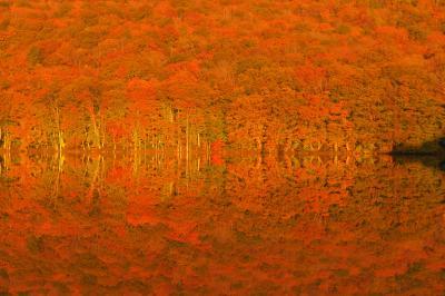 赤の世界| 朝陽が当たると対岸のブナ林が真っ赤に。無風状態だったので、地上と水面の区別が無くなるほどのシンメトリーになりました。