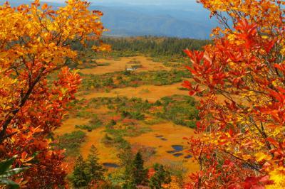 紅葉のフレーム| 登山道横の紅葉をフレームにして毛無岱を撮影。