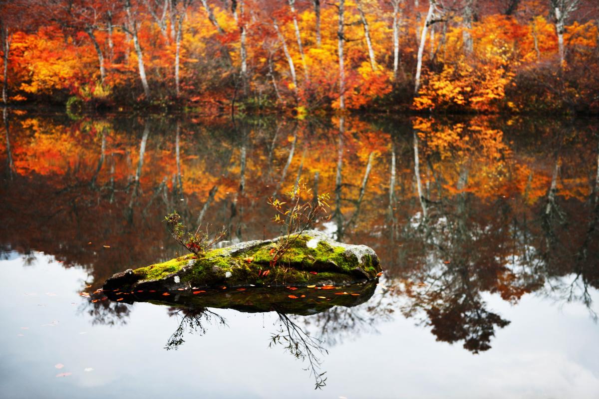 紅葉のアート 芸術作品のような岩です。
