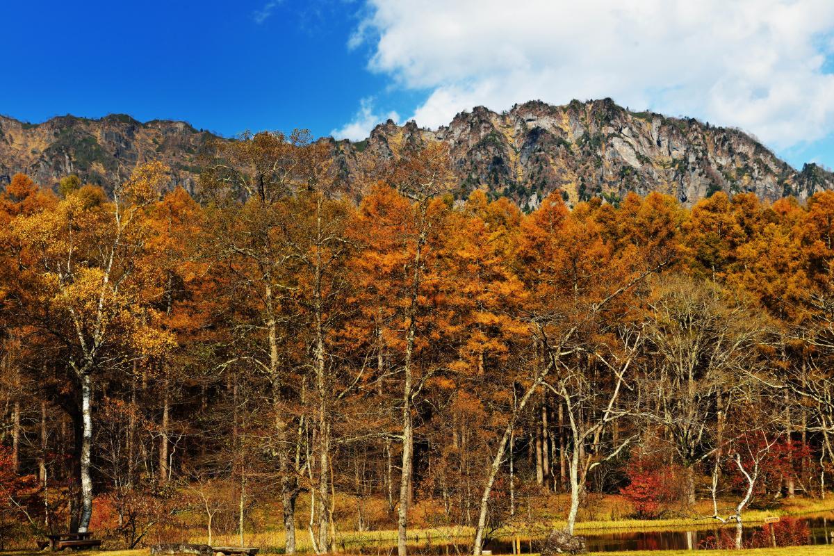 みどりが池と戸隠山 カラマツの黄色と岩山のコントラストが美しい