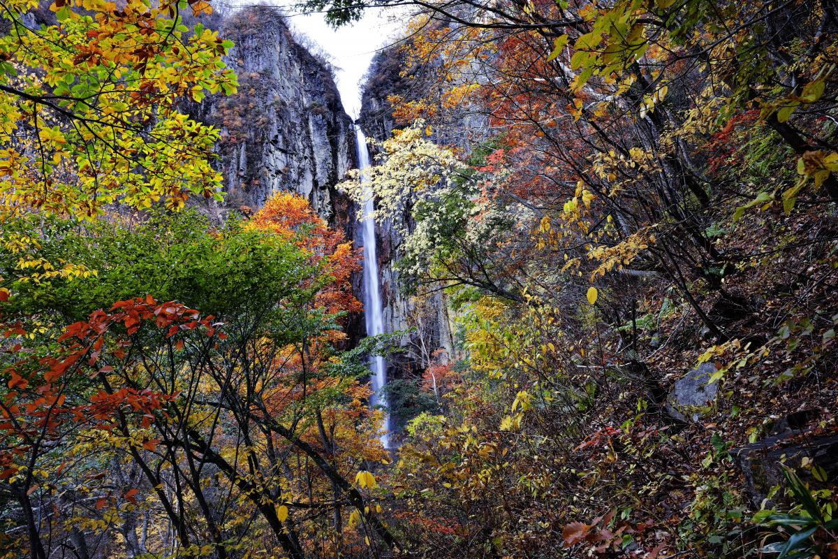 権現滝の紅葉 手前の紅葉の色が美しい