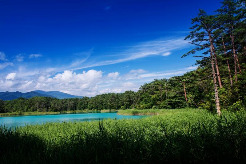 [ エメラルドグリーンの鏡 ]  夏の緑の中に神秘的な色の沼があります