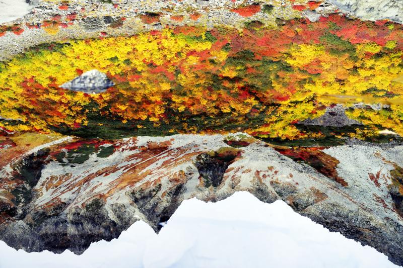 [ 浮遊 ]  紅葉の中を岩が泳いでいるようです。