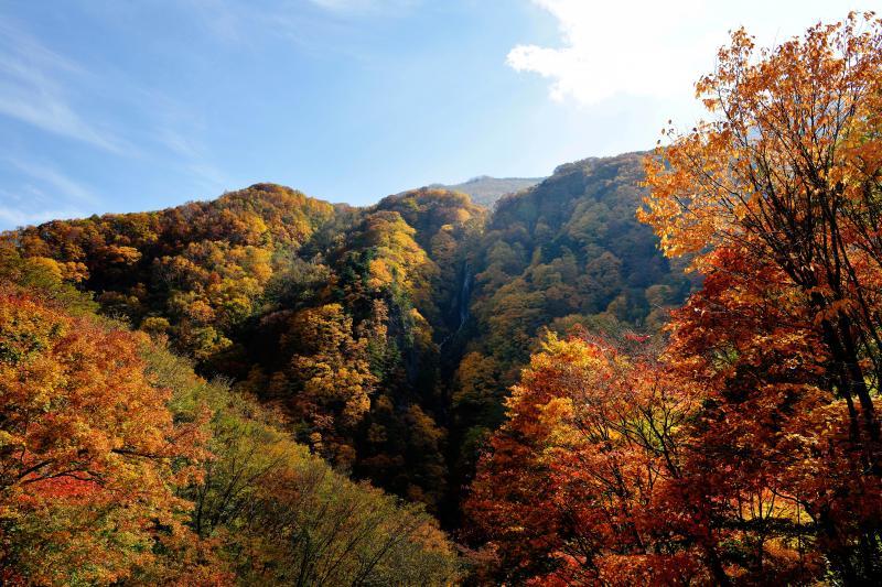 [ 紅葉の八滝 ]  前方の山に滝が見えます