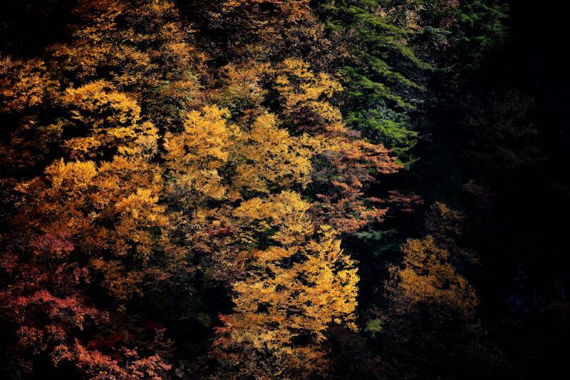 [ 八滝紅葉 ]  滝の周りの紅葉が綺麗です