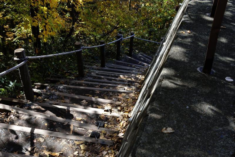 [ 駐車場からの入口 ]  はじめから下りの階段です