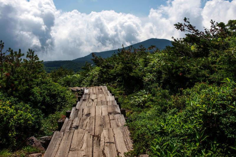 [ 木道出現 ]  酸ヶ平小屋の分岐まで木道が続きます。