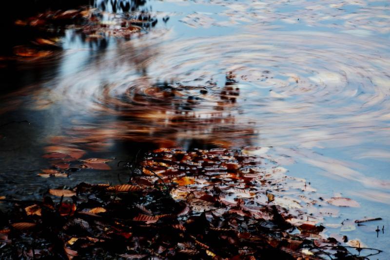 [ 落ち葉がグルグル ]  水の流れで落ち葉が動いています