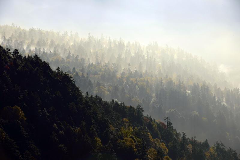 [ 絵のような世界 ]  朝霧と光芒の奇跡的な演出