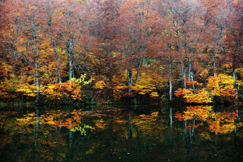 [ 晩秋の池 ]  小さな木の紅葉が残っていました