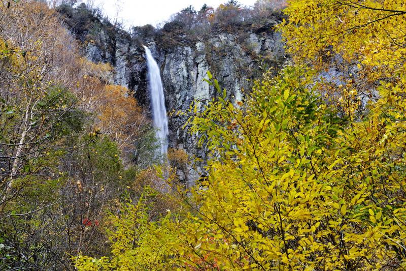不動滝とご対面 | 木々の間から不動滝が見えました。