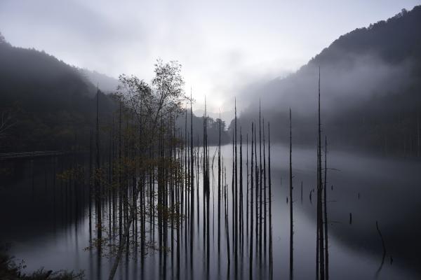 [ 自然湖の夜明け ]  立ち枯れの奥が明るくなってきました。