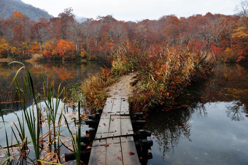 [ 鎌池の島 ]  湖畔から小さな島に渡れます。