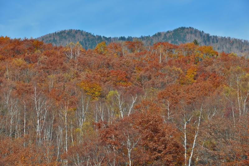 [ 終わりかけの紅葉 ]  秋の終わりの色です