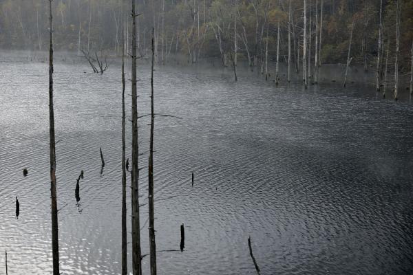 [ 銀色の輝き ]  湖面に光が当たり始めました。