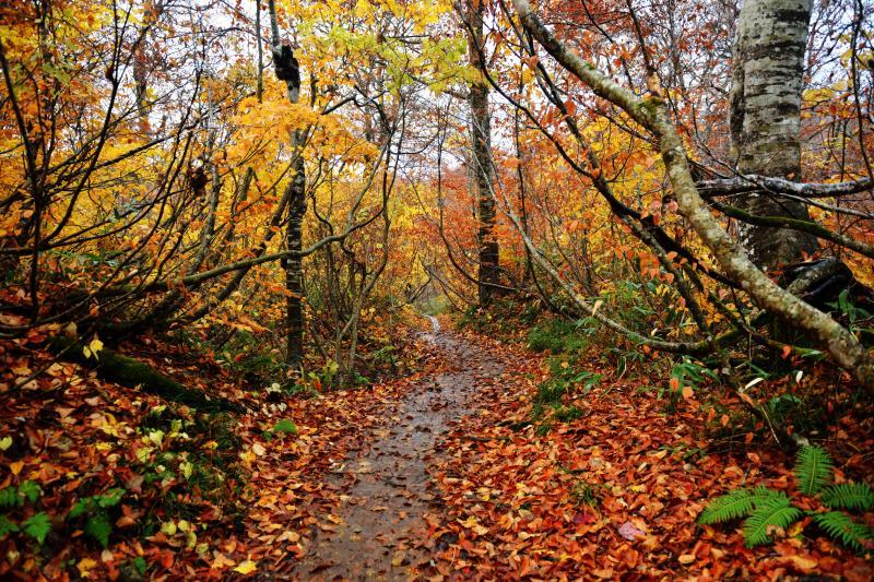 [ 鎌池散策路 ]  紅葉の中を少し歩くと池に着きます