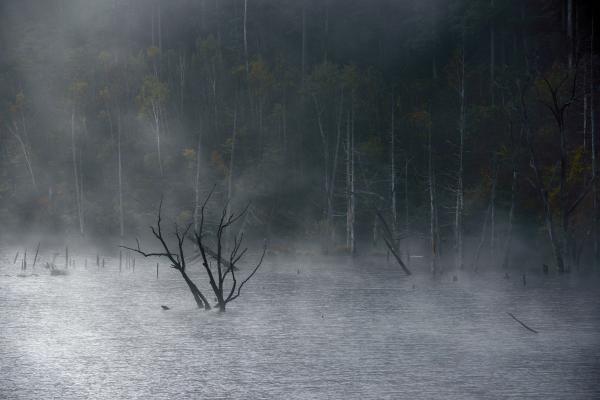 [ 霧の中で ]  木の枝先が湖面に顔を出しています。