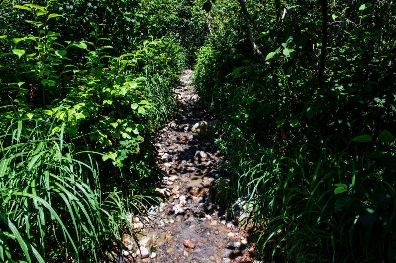 [ 湿原から山道へ ]  浄土平の湿原を越えるといよいよ山道です
