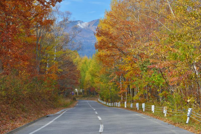 [ 紅葉と乗鞍岳 ]  道路の両脇は紅葉し、正面には乗鞍が見えます