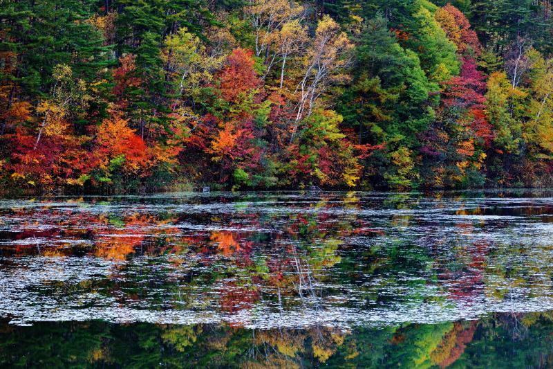 [ シンメトリー ]  紅葉が水面に映っています。