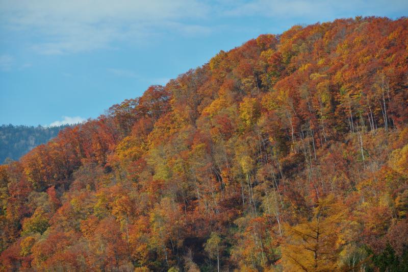 [ 紅葉斜面 ]  紅葉のピークは過ぎていましたが、秋の終わりを感じる風景を満喫することができました。