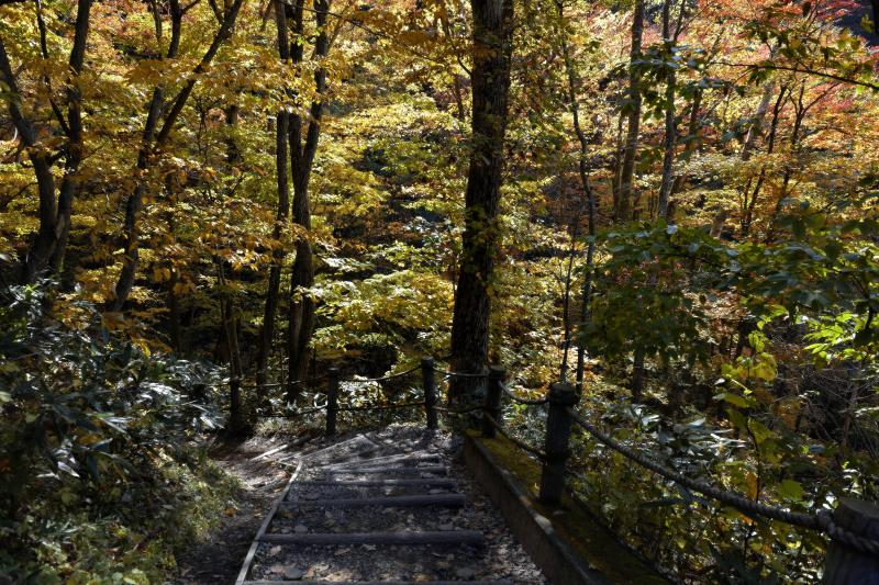 [ 雷滝への道 ]  紅葉の林の中を進みます