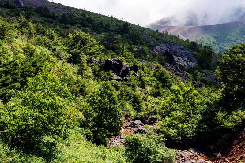 [ 登山道から見える吾妻小富士 ]  だんだんと山道らしくなってきます