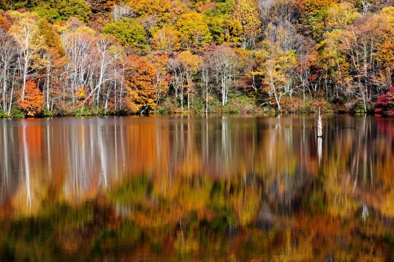[ 紅葉の揺らぎ ]  水に映った紅葉が揺れています