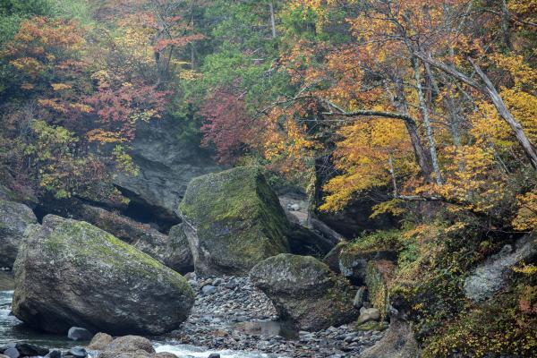 巨大岩と紅葉の渓谷 | 渓谷には巨大な岩が沢山あります