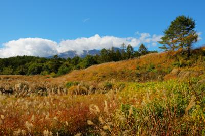 ススキと白樺  ススキの草原が広がります