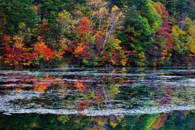 シンメトリー| 紅葉が水面に映っています。