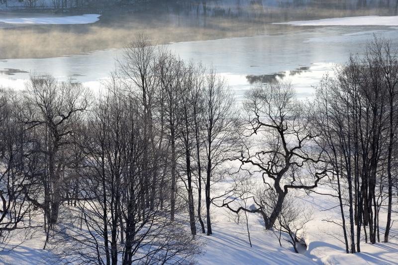 [ 小野川湖畔の踊る木 ]  ダンスしているような木です。