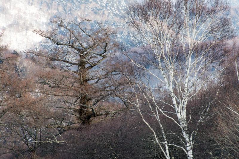 [ ふたつ ]  対照的な木が印象に残りました。
